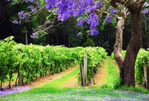 Bago Vineyards - Accommodation Find