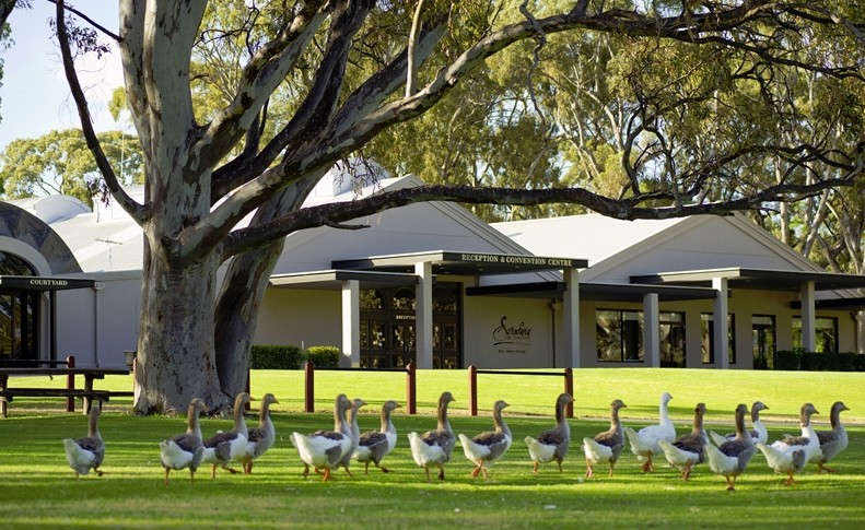 Serafino McLaren Vale - Accommodation Find