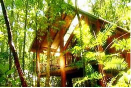 The Canopy Treehouses - Accommodation Find