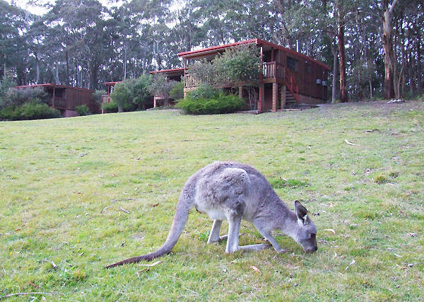 Jenolan Caves Cottages - Accommodation Find