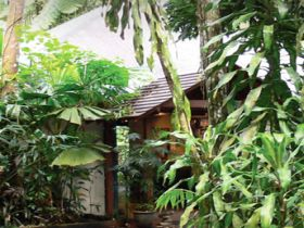 Heritage Lodge and Spa - In the Daintree - Accommodation Find