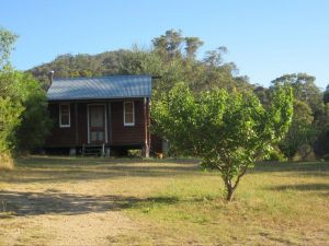 Peach Tree Cabin - Accommodation Find