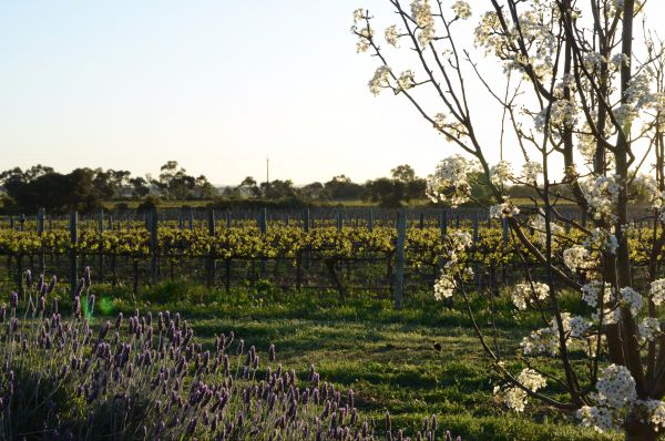 Angas Plains Wines Suites - Accommodation Find