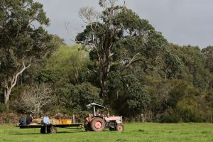 Boronia Farm - Accommodation Find