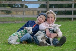 Narnu  Farm Farm stay/ School Camp - Accommodation Find
