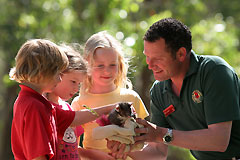 Cleland Wildlife Park - Accommodation Find