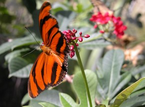 Butterfly Farm - Accommodation Find