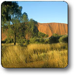 Uluru - Kata Tjuta National Park - Accommodation Find
