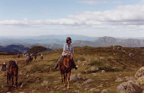 High Country Horses - Accommodation Find