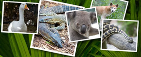 Rockhampton Zoo - Accommodation Find
