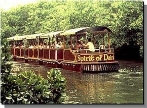 Daintree Rainforest River Trains - Accommodation Find