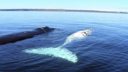 Australian Whale Watching - Accommodation Find