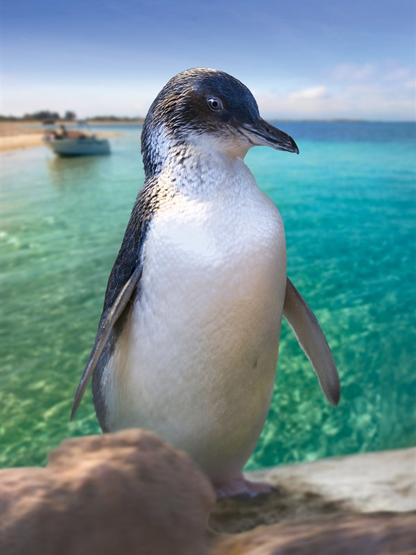 Penguin Island - Accommodation Find
