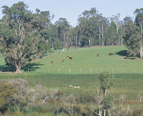 Scenic Drives - Bunbury Collie Donnybrook - Accommodation Find