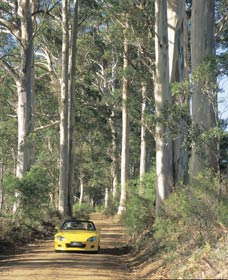 Mount Shadforth Scenic Drive - Accommodation Find