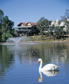 White Swans - Accommodation Find