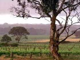 Yangarra Estate Vineyard - Accommodation Find