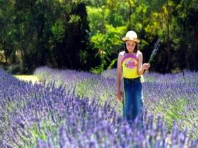 Brayfield Park Lavender Farm - Accommodation Find