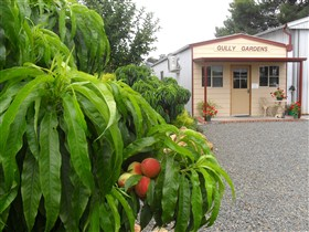 Gully Gardens - Accommodation Find