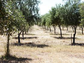 Talinga Grove Olive Oils - Accommodation Find