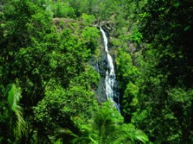 Kondalilla National Park - Accommodation Find