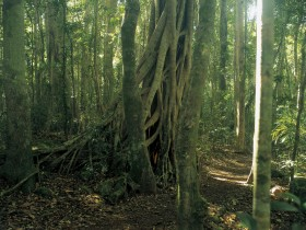 Lamington National Park Binna Burra Section - Accommodation Find