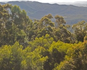 Conondale National Park - Accommodation Find