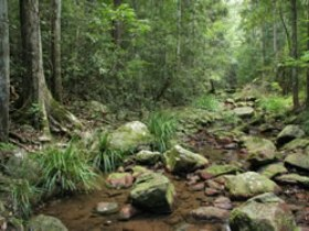 Amamoor State Forest - Accommodation Find