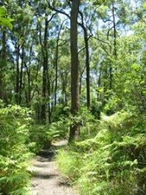Mapleton Falls National Park - Accommodation Find