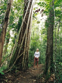 Wet Tropics - Accommodation Find