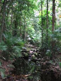 Mossman Gorge Rainforest Circuit Track Daintree National Park - Accommodation Find