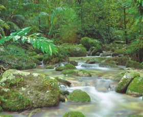 Mossman Gorge Daintree National Park - Accommodation Find