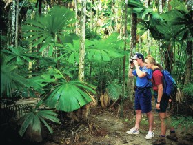 Mount Sorrow Ridge Trail Daintree National Park - Accommodation Find