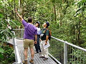 Daintree Discovery Centre - Accommodation Find