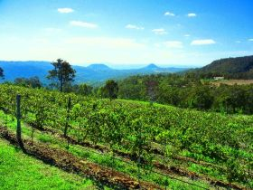 Preston Peak Wines - Accommodation Find