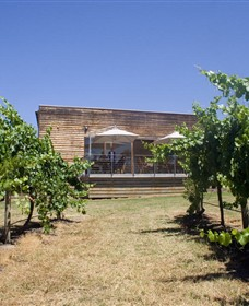 Shantell Vineyard - Accommodation Find