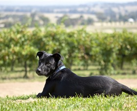 Moothi Estate Vineyard and Cellar Door - Accommodation Find