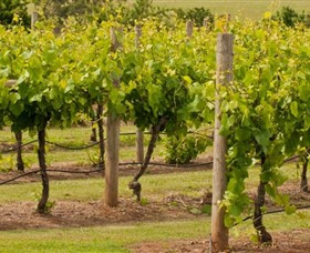 Mt Coghill Vineyard - Accommodation Find