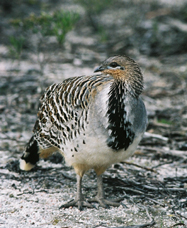 Yongergnow Australian Malleefowl Centre - Accommodation Find