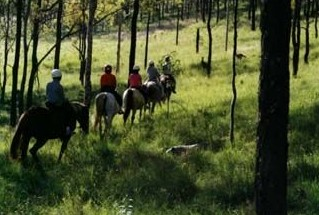 Hunter Valley Horse Riding and Adventures - Accommodation Find