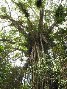 Cathedral Fig Tree - Accommodation Find