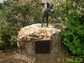 Dingo Statue - Accommodation Find