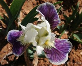 Sunshine Iris Nursery - Accommodation Find