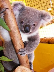 Cooberrie Park Wildlife Sanctuary - Accommodation Find
