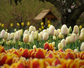 Tulip Top Gardens - Accommodation Find