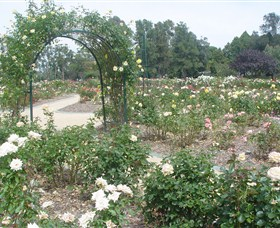 Victoria Park Rose Garden - Accommodation Find