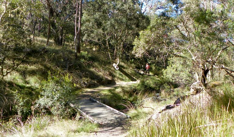 Wollomombi walking track