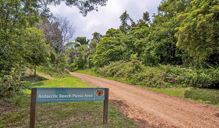Antarctic Beech picnic area - Accommodation Find