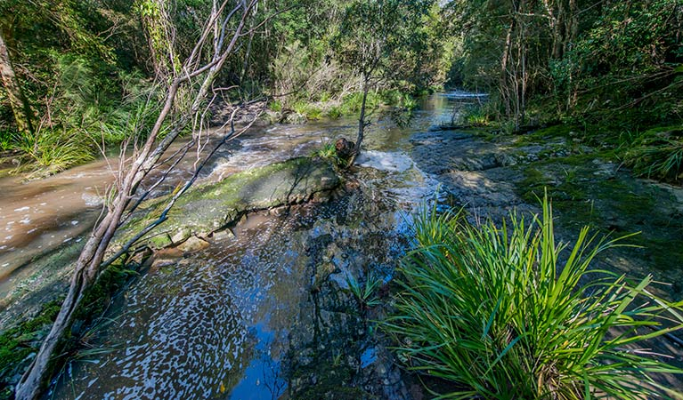 Dawson River walking track - Accommodation Find