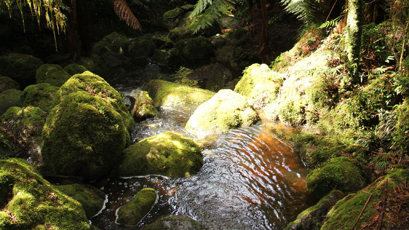 South East Forests National Park - Accommodation Find